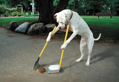 dog-poop-scoop